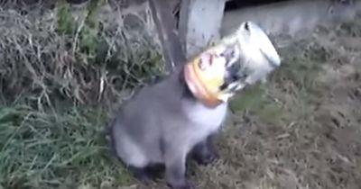 Der Kopf des kleinen Fuchses war eingeklemmt und er war absolut verzweifelt!