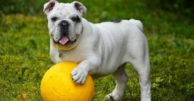 Top 5 der beliebtesten Hunderassen!