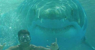 Diese 5 Haiarten können Menschen angreifen