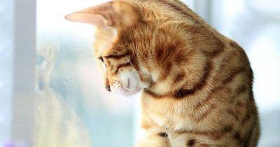 Katzenbesitzer aufgepasst: Diese Gefahren lauern im Haushalt!