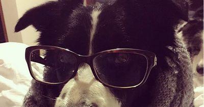Diese Hunderassen sind besonders intelligent