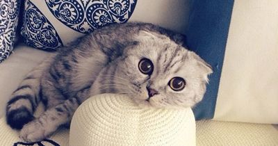 Der Sommer ist vorbei? Diese Katzen sind untröstlich und zeigen es!