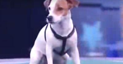 Der intelligenteste Hund der Welt!