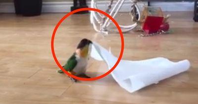 Bestes Entertainment: Ihr könnt dieses Video keine 3 Sekunden ansehen, ohne zu lachen!