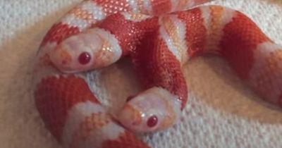 Diese Schlange ist eine echte Sensation!