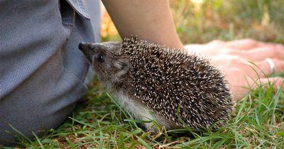 So nützlich sind diese Tiere wirklich - du wirst sie danach mit anderen Augen sehen!