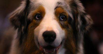 5 Gründe, warum wir unsere Haustiere einfach lieben müssen