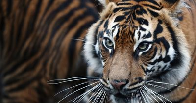 4 Gründe, warum Tiere häufig nicht in den Zirkus gehören
