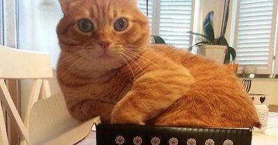 Diese Katzen wollen sich nicht eingestehen, dass sie zu dick sind!