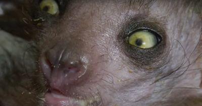 8 Tiere, die unheimlicher sind, als man erwartet...