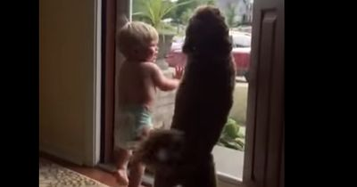 Daddy kommt nach Hause. Baby und Hunde reagieren unglaublich!
