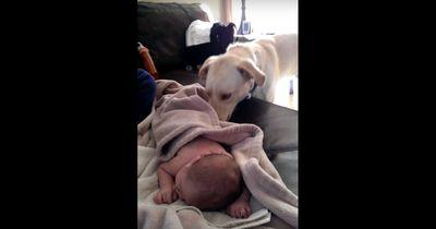 Als der Hund seinen kleinen Freund schlafen sah, tat er etwas unglaublich Schönes!