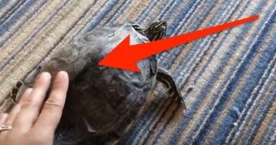Diese Schildkröte beherrscht das Twerken!