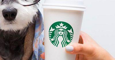 Die 6 größten Starbuck-Fans, die ihr je gesehen habt!