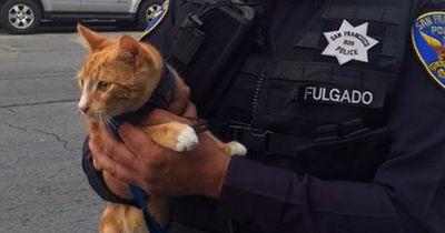 Diese Katze verhinderte einen Selbstmord!