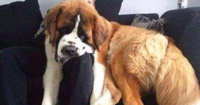 Diese Hundebesitzer haben es wirklich nicht leicht