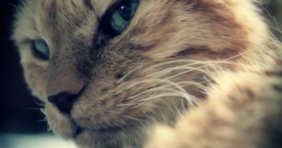 11 Geheimnisse über deine Katze