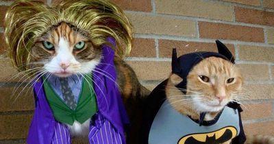 Du weißt nicht, als was dein Haustier an Halloween gehen soll?