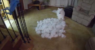 Was hat dieser Hund nur angestellt?