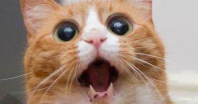 Kennst du schon die 'Screaming Cats'?