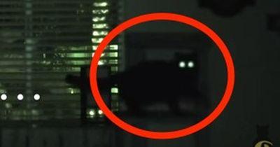 Das macht deine Katze wirklich in der Nacht!