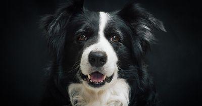 5 Gründe, warum dein Hund NICHT alleine zu Hause sein sollte!