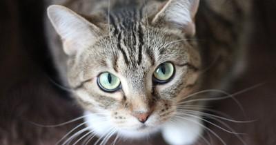 Achtung: Diese 5 Lebensmittel sind gefährlich für deine Katze!