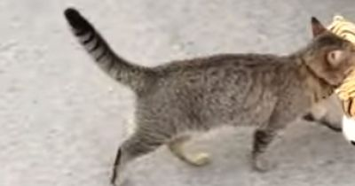 Diese Katze ist ein kleiner Dieb!
