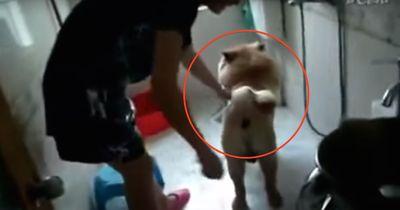 Dieser Hund tut alles dafür, um nicht baden zu müssen!