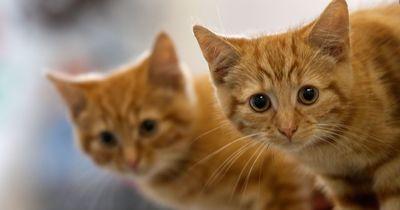 Diese 5 Sachen wusstest du garantiert noch nicht über Katzen!