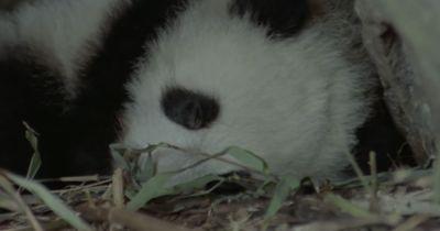 Schlafen kann in der Tierwelt ganz schön verrückt sein!