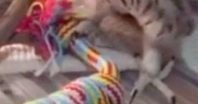 Seltene Aufnahme: Baby-Eule mit einzigartigen Bewegungen!