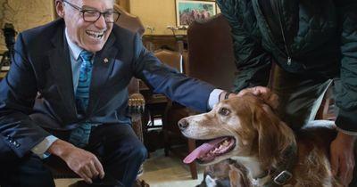 Dieser Hund bekommt eine Auszeichnung...