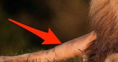 12-jähriges Mädchen von wilden Löwen gerettet!