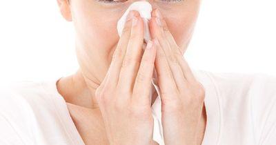 Tierhaar-Allergie! Was tun?