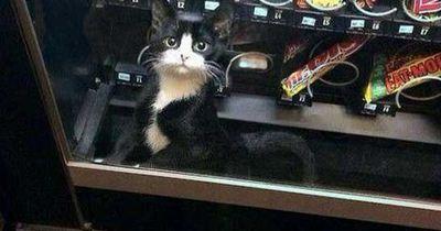 Diese Katzen sind irgendwie...anders!