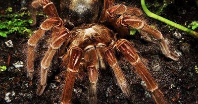 Die 10 giftigsten Spinnen der Welt