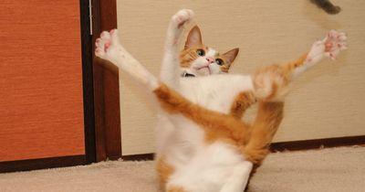 Die Top 7 Dinge, die Katzen nerven