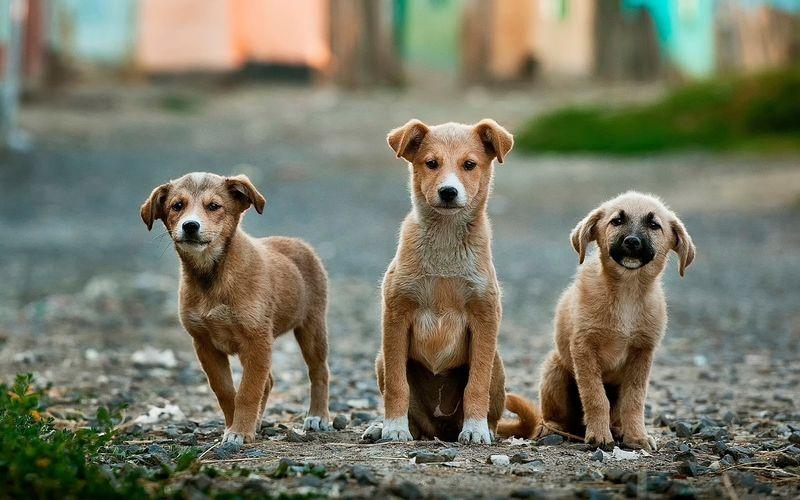 Warum Hunde Kot fressen