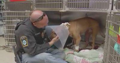 Rettung für diesen armen Hund!