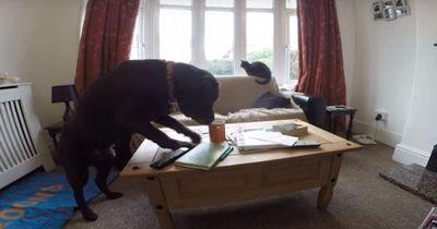 Das passiert, wenn Hund und Katze allein Zuhause sind!