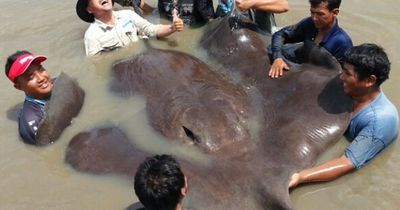 Diese 5 Riesentiere gibt es wirklich!