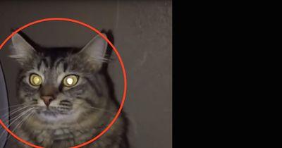 Seine Katze tat etwas Unerwartetes...