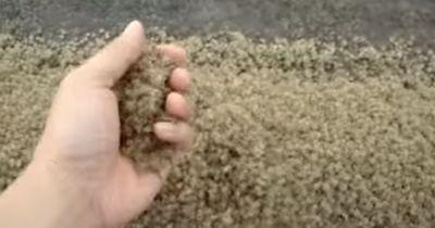 Dieser Sand LEBT! Wärst du mutig genug ihn anzufassen?