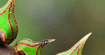 Diese 5 kuriosen Tiere hast du noch nicht gesehen!