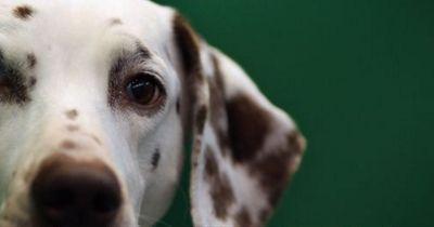 Diese 5 Fütterungsfehler machen viele Hundebesitzer!