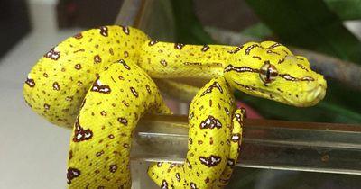 Die 5 schönsten Schlangen