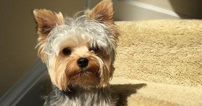 Allergiker aufgepasst: Diese Hunderassen haaren am wenigsten!