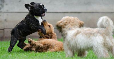 So wirst du das Leben deines Hundes verkürzen