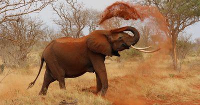 Ob du es glaubst oder nicht: 5 unfassbare Fakten über Elefanten!